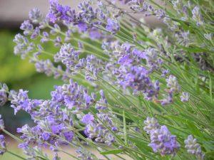 Prevención y tratamiento de plagas en el huerto
