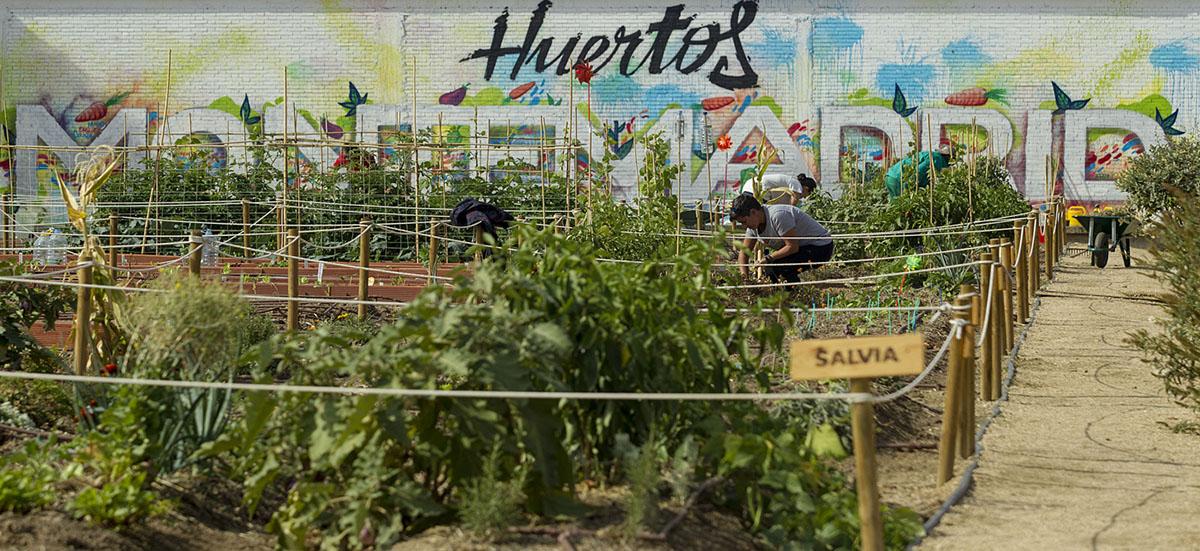 Bienvenidos a Huertos Montemadrid