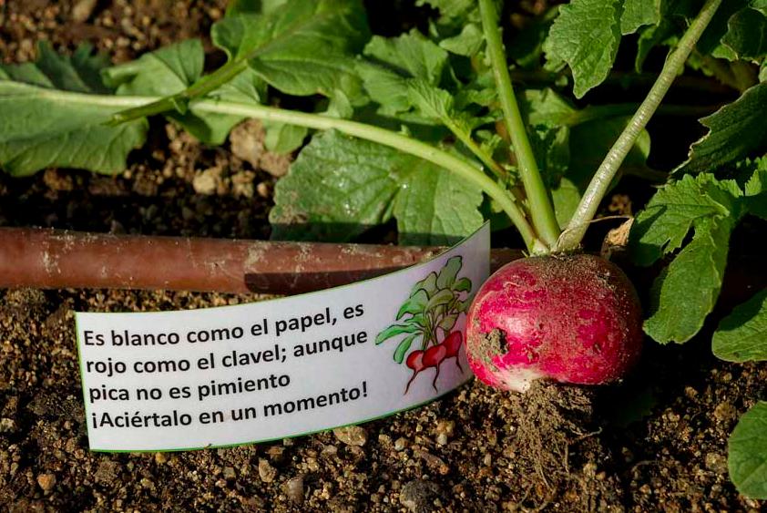 ocio_sostenible