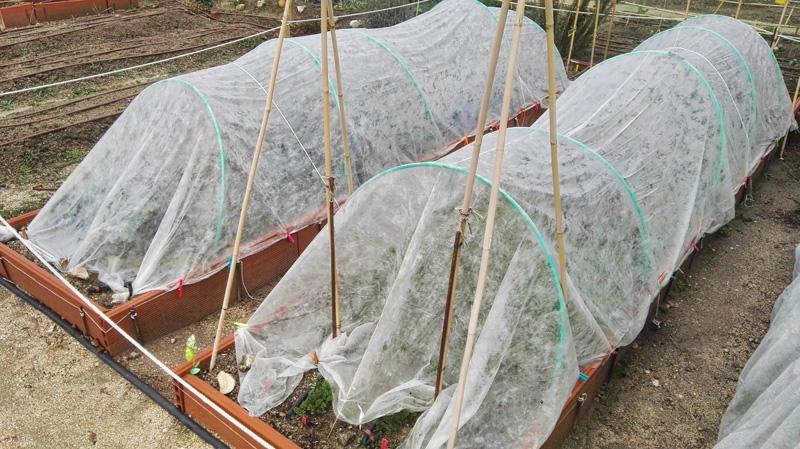 microtuneles para proteger cultivos