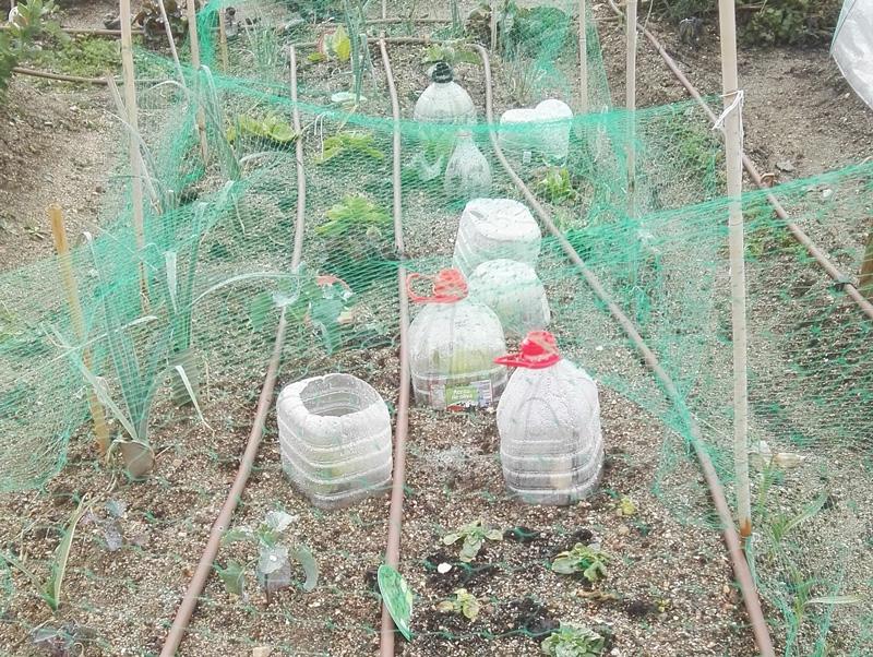 Proteccion de cultivos con envases reciclados